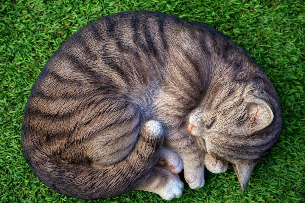 Para que sirve cola de los gatos
