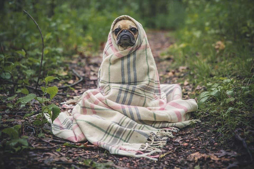 Cómo prevenir las pulgas y garrapatas en los perros