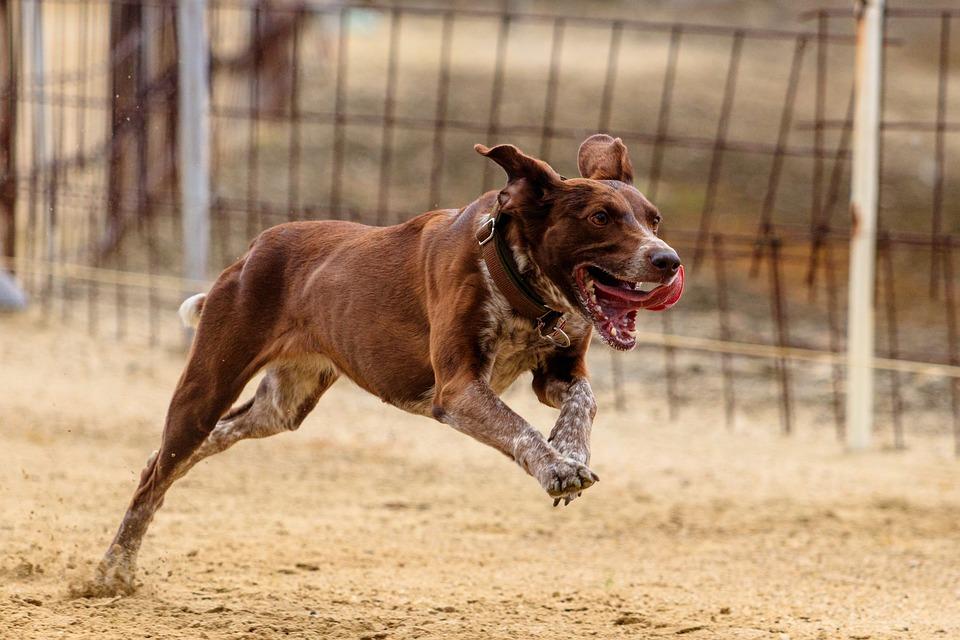 Cómo evitar que el perro se escape