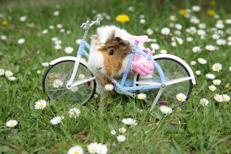 Alergias de las mascotas en primavera