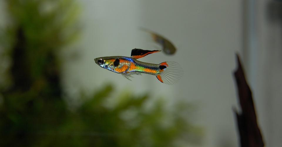 Cómo cuidar tus peces