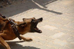 Cómo controlar perros agresivos