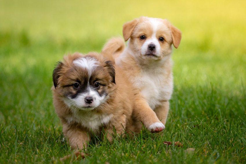 Tips básicos para cuidar un perro