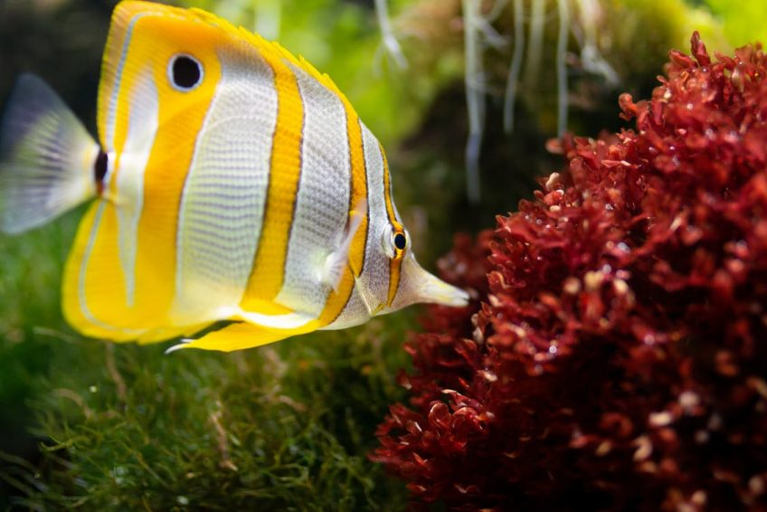 Tipos de alimentos para peces de acuario