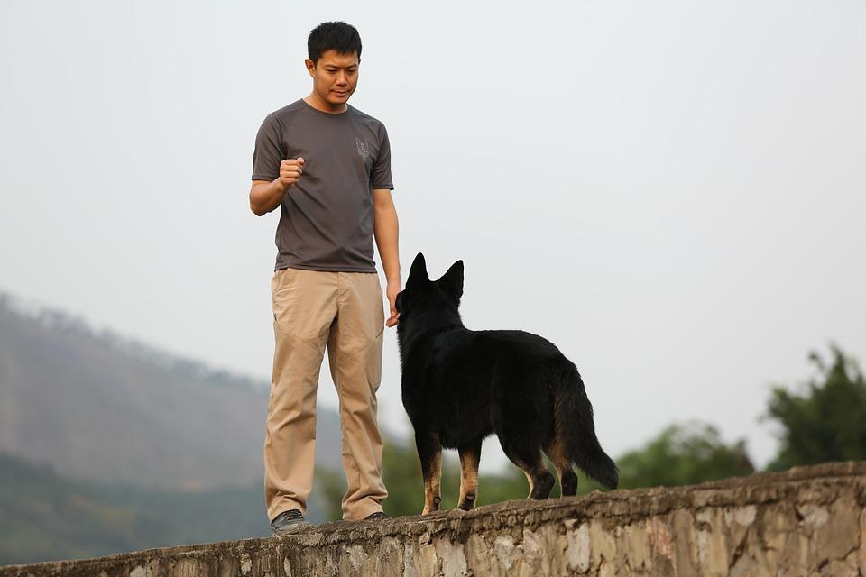 Paseadores de Perros en Colombia