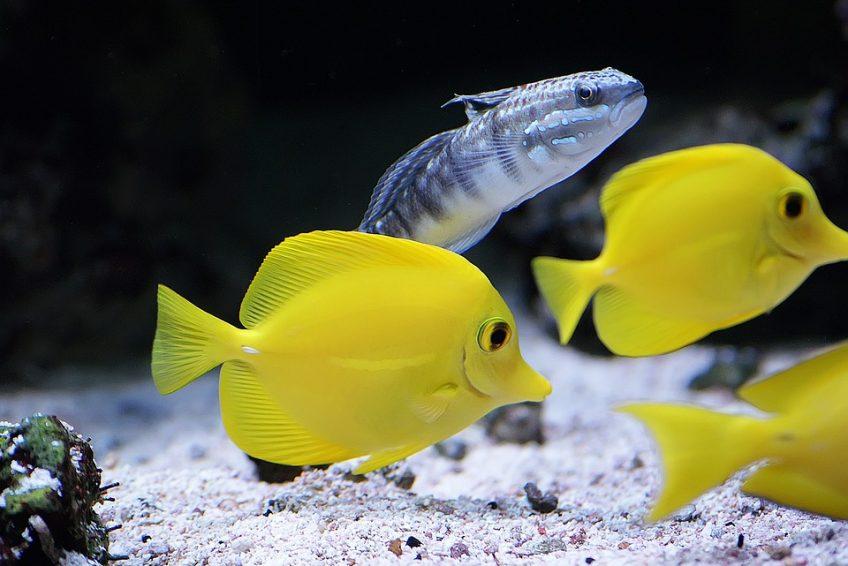 Escoger peces para un acuario