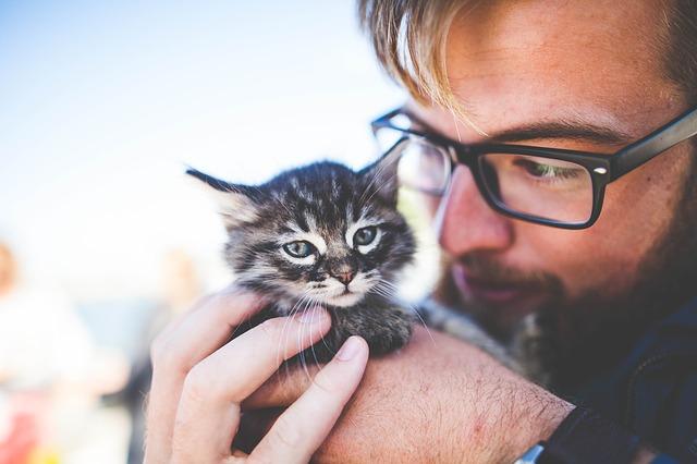 Terapia depresión con gatos