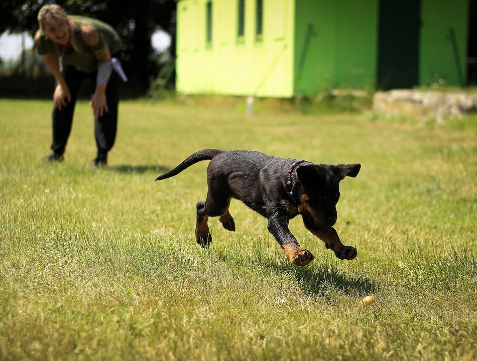 Criaderos de Perros en Armenia Quindío