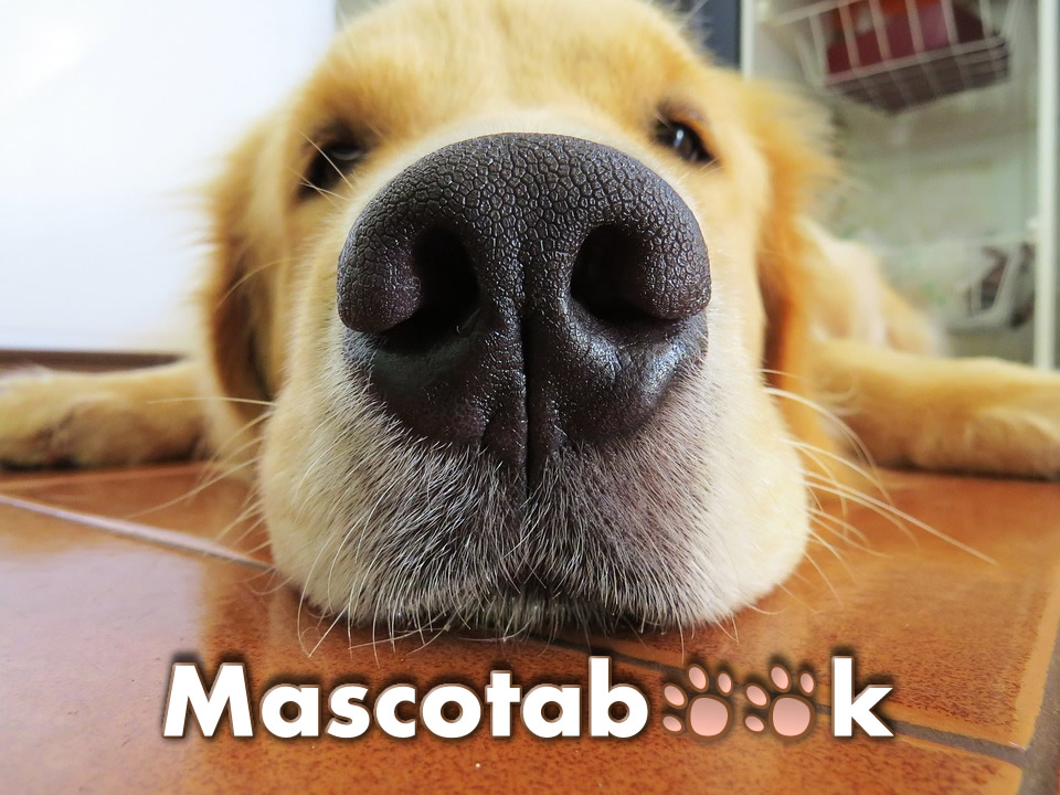 Veterinarios Tiendas de Mascotas en Colombia